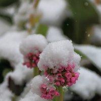 Весна.Причуды природы. :: Татьяна Панчешная