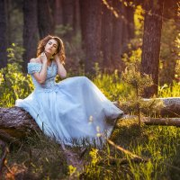 На закате в лесу! :: Вячеслав