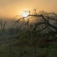 Туманное утро. :: Александр Тулупов