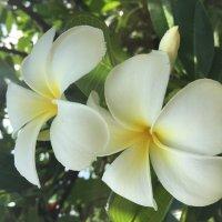 Мальдивы.Цветущий остров. :: Татьяна Калинкина
