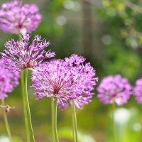 Цветок и пчелка. :: Николай Нетребенко