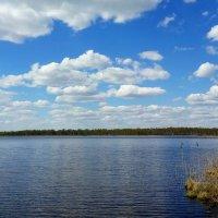 озеро Шейно :: Андрей Козов