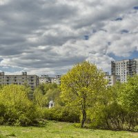 первая зелень :: Владимир Иванов