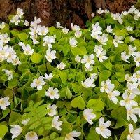 Про весну.. :: Tatjana