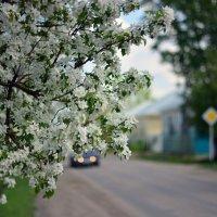 Весна.Май. :: Юрий Фёдоров