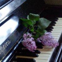 Весна :: Лара Амелина