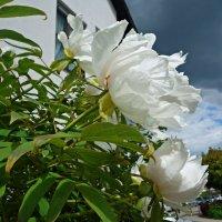 Чудный май – весны прелестник... :: Galina Dzubina