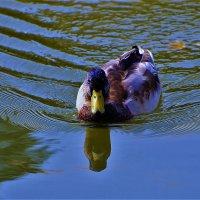 На Китайском пруду... :: Sergey Gordoff
