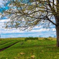Дорога в весну :: Любовь Потеряхина