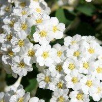 Кружевных цветов очарованье. :: Валентина ツ ღ✿ღ