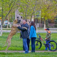 Человек собаке друг, это знают все вокруг... :: Elena Izotova