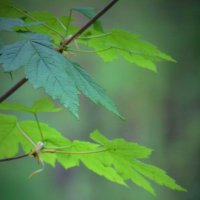 Весенняя зелень :: spm62 Baiakhcheva Svetlana