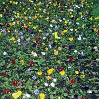 Весна :: Андрей Тихомиров