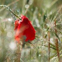 Волшебство майского утра :: Nyusha .