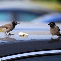 Завтрак на двоих ..... :: Aleks Ben Israel