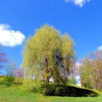 Дерево :: Падонагъ MAX