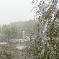 И пошёл снег ...17 мая . :: Мила Бовкун