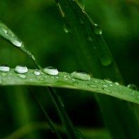 после дождя :: Кристина Юричковская