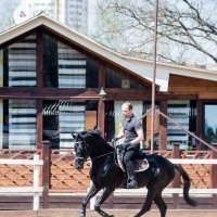 Молодой конь :: Анна Раневская