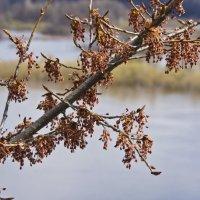 Затянувшаяся весна. :: Андрей Синицын