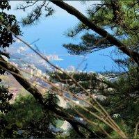 Вид на Ялту с горы :: Ирина Лушагина