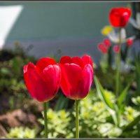 Про цветы :: Владимир Белов