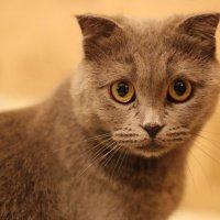 Cat :: Rina Klimenko