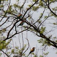 птички :: Cветлана Свистунова