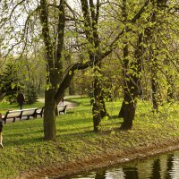 Майская зелень :: Aнна Зарубина