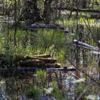 В лесу после дождей. :: Владимир Безбородов