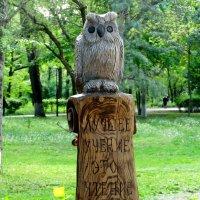 Умная сова в парке... :: Тамара (st.tamara)