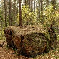 И на камнях растут деревья... :: Сергей Герасимов