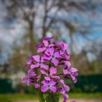 цветочки во дворе :: Ольга (Кошкотень) Медведева