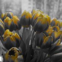 Тюльпаны :: Кристина Юричковская