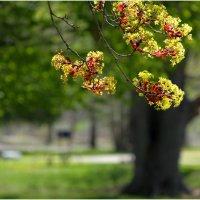 весна :: Alexander Hersonski