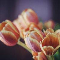 тюльпаны :: Евгения Назарова
