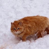 В снегу.. :: Антонина Гугаева