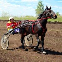 Жизнь - это непрерывные скачки, только одни на них жокеи, а другие - лошади :: Андрей Заломленков