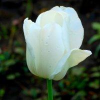 Свежесть майского утра... :: Тамара (st.tamara)