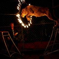Тигр в прыжке :: Rina Klimenko