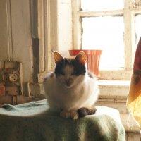 Кошка :: Boris Trikhleb