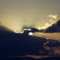 Лучи солнца. :: Валерьян