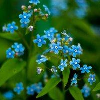 цветочки :: Игорь