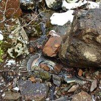 Обломки самолёта разбившегося 50 лет назад. :: Сергей Карцев
