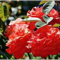 Прекрасны лета ароматы... :: Veselina *