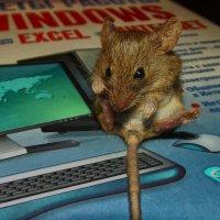 мышка ася :: Роза Бара
