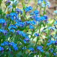 лесные цветы :: spm62 Baiakhcheva Svetlana