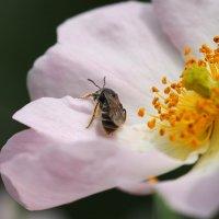 Весенние работы в саду(серия) :: Swetlana V