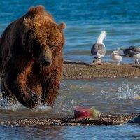 Ленивая рыбалка :: Денис Будьков