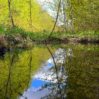 И вдохновения искать в тиши лесной.. :: Андрей Заломленков